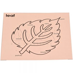Control card for Leaf Puzzle | Montessori Puzzles | Preschool Educational Toys | Kidken Edu Solutions