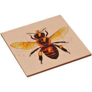 ZW07-Bee-Puzzle-