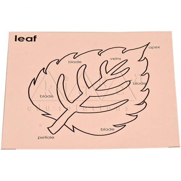 B007Old-code_-B007New-Code-Control-card-for-Leaf-Puzzle.jpg