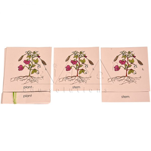 B013Old-Code_B013New-Code-Nomenclature-Cards-Parts-of-Plant.jpg