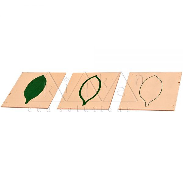 BB002-Botany-Form-Cards-_-Cabinet-BR-1.jpg