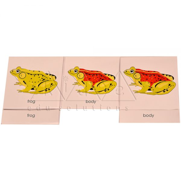ZC0322-Nomenclature-cards-Frog-.jpg