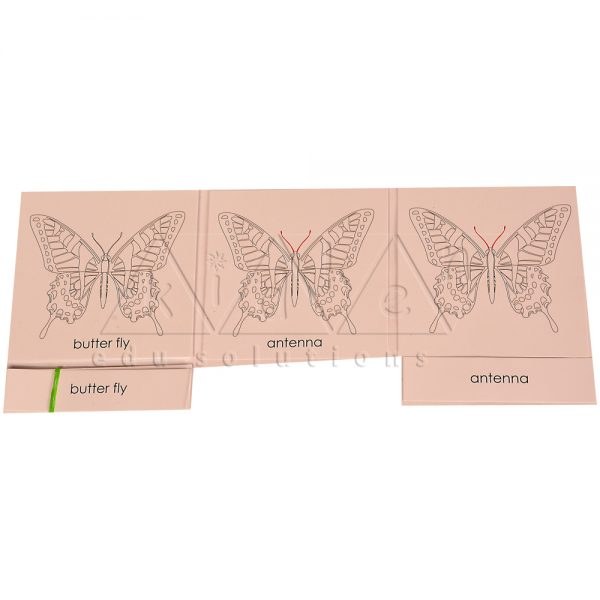 ZCO301-Nomenclature-Cards-Butterfly-.jpg