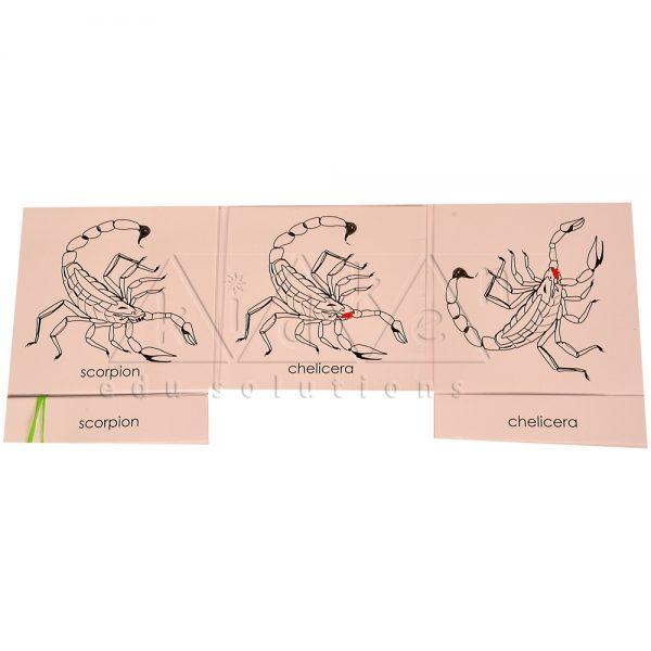 ZCO306-Nomenclature-cards-Scorpion-.jpg