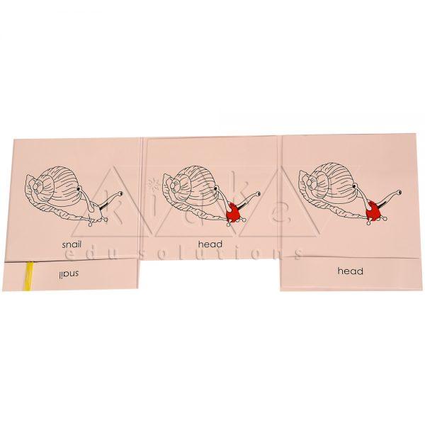 ZCO308-Nomenclature-cards-Snail-.jpg