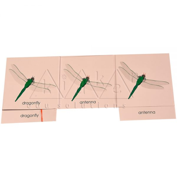 ZCO311-Nomenclature-cards-Dragonfly-.jpg