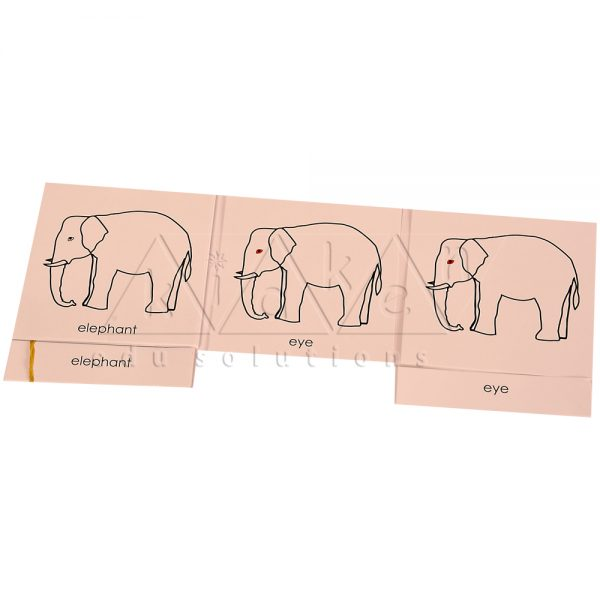 ZCO313-Nomenclature-cards-Elephant-.jpg