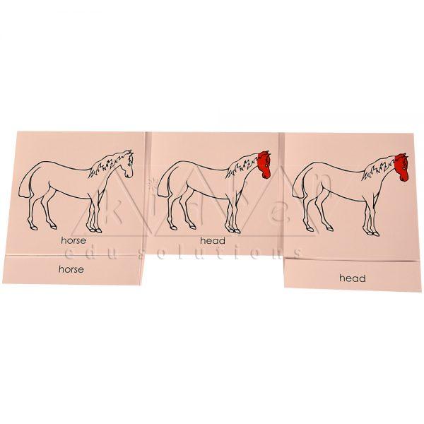 ZCO318-Nomenclature-cards-Horse-.jpg