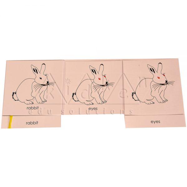 ZCO319-Nomenclature-cards-RabbitNomenclature-cards-Rabbit-.jpg