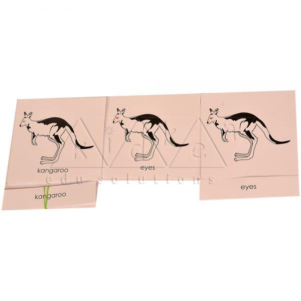 ZCO325-Nomenclature-cards-Kangaroo-.jpg