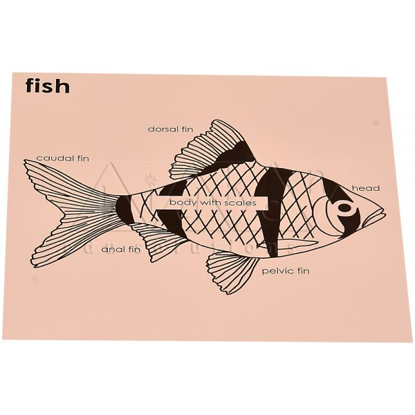 ZW13-Control-card-for-Fish-puzzle-.jpg