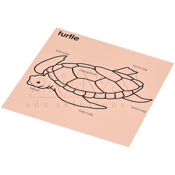 ZW15-Control-card-for-Tortoise-puzzle-.jpg