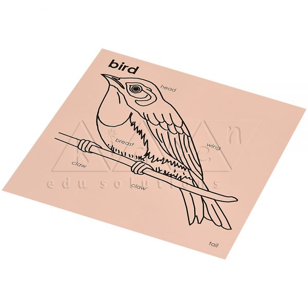 ZW16-Control-card-for-bird-puzzle-.jpg