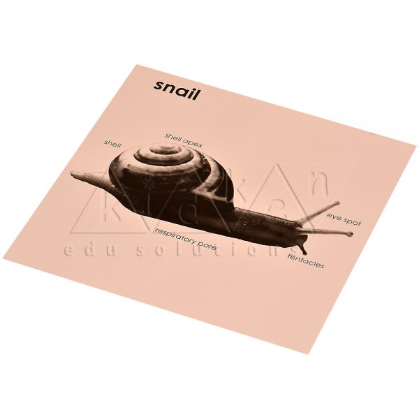 ZW18-Control-card-for-Snail-Puzzle-.jpg
