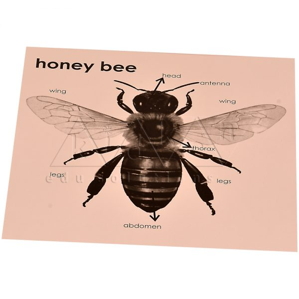 ZW19-Control-card-for-Honey-Bee-Puzzle-.jpg