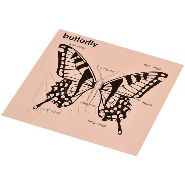 ZW24-Control-card-for-Butterfly-Puzzle-.jpg