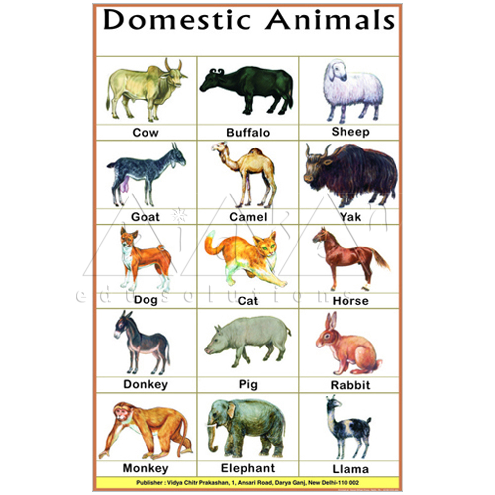 Buy Domestic Animals & other classroom equipments at best ...