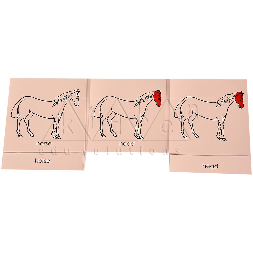 Nomenclature Cards Horse Kidken Edu Solutions